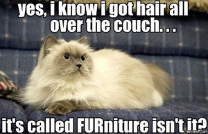 Your cat spends more time on the sofa than you