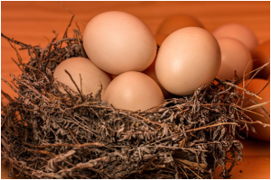 Nest and eggs: kept intact by insurance