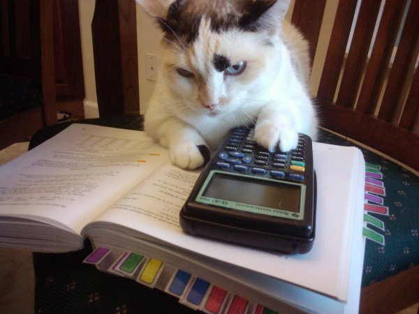 Even Furball does her due diligence - why not you?