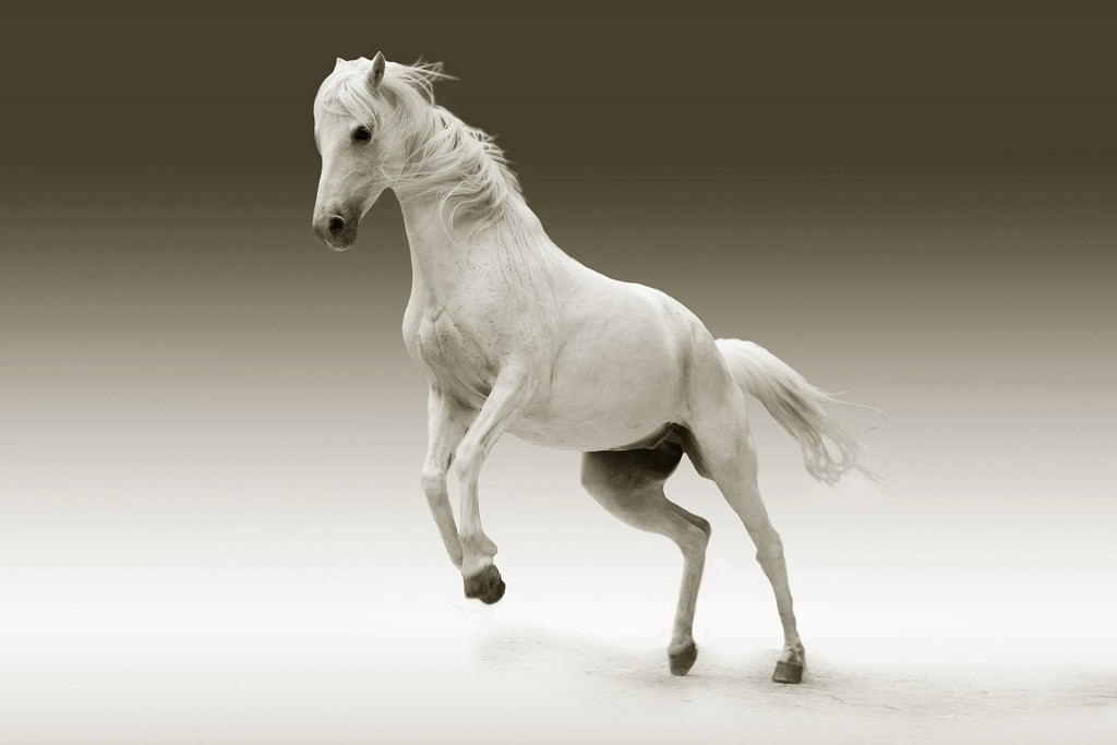 We assure you that Donald is no white horse either.