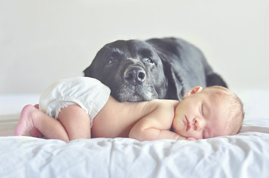 best-dog-with-baby-picture-ever