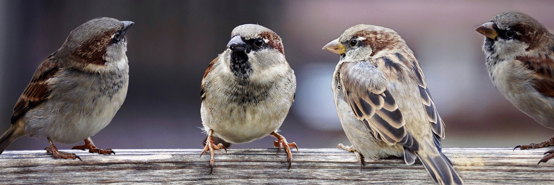 You have to decipher whether it is birds talking. Literal translation required.